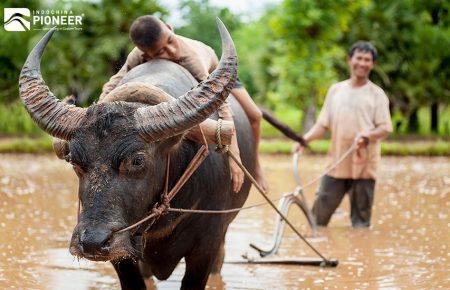 Vacaciones en familia en Camboya