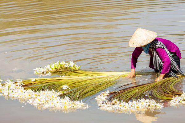 Sorprendente cosas que obtendrá en su viaje a Vietnam