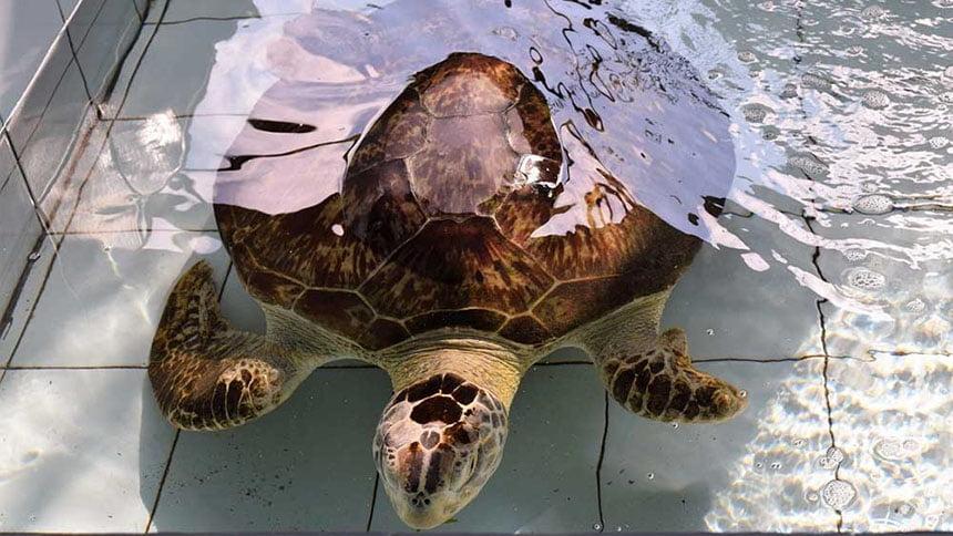 Turtle-Conservation Centre Bali