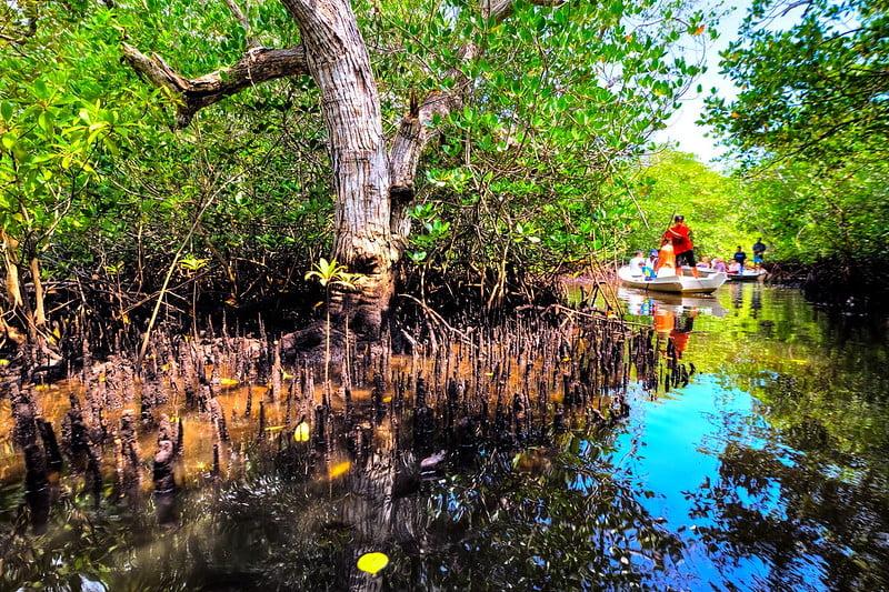 Nusa Lembongan forest